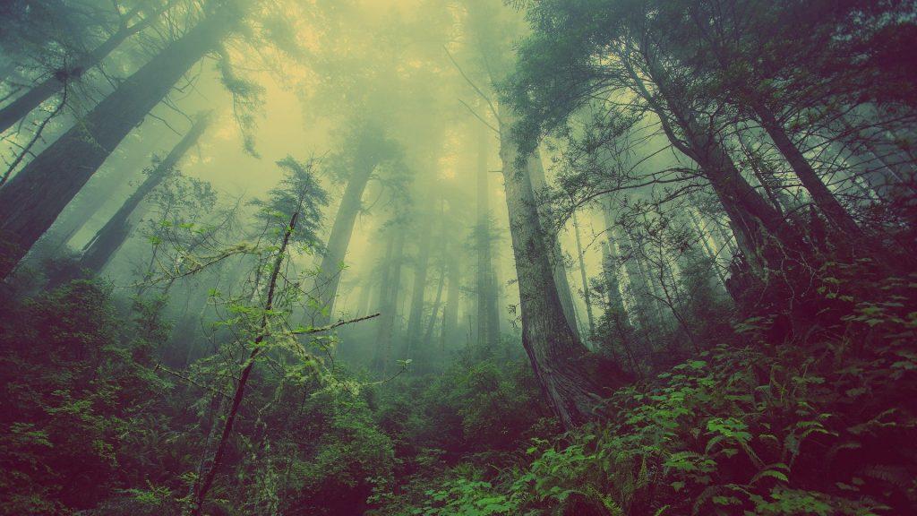 forest-931706_1920.jpg