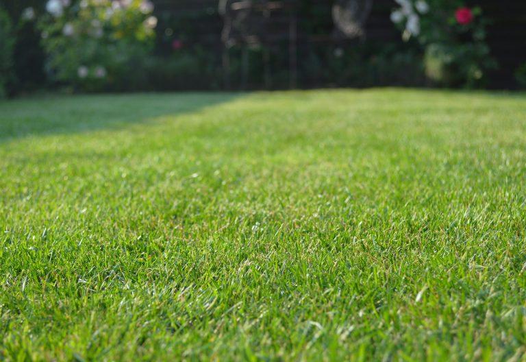 Nieuwe website graszoden